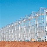 VVV Venlo greenhouse